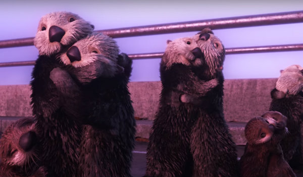 snuggle party our weird fascination with otters � the leonian